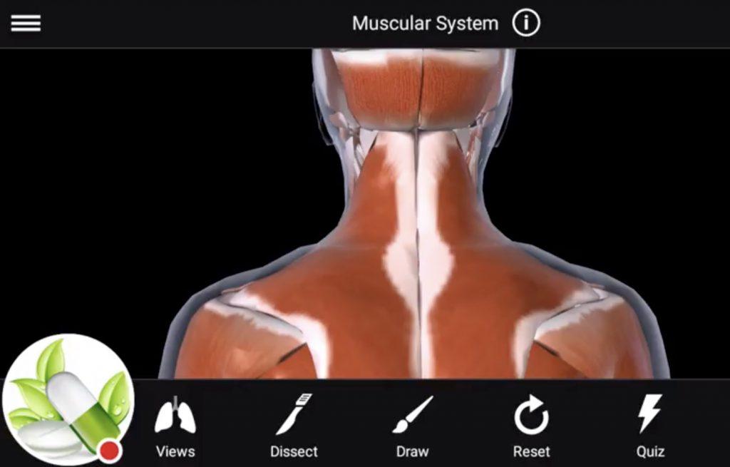 Anatomie Lessen